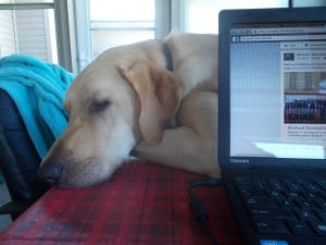 Jake, author Jean Rabe's yellow lab, rests beside her computer